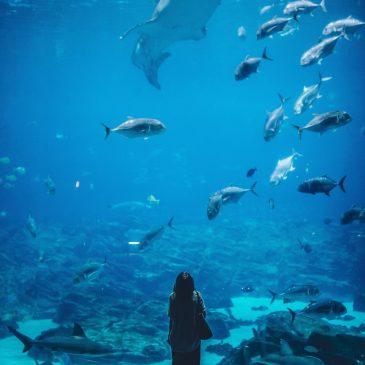 aquarium, credit union los angeles, camino federal credit union