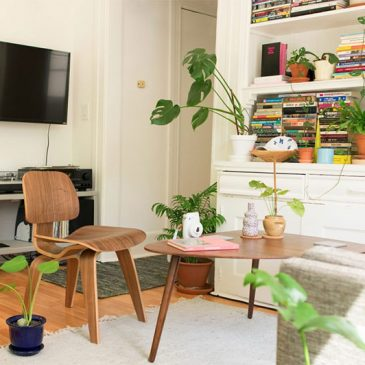 picture of living room with plants